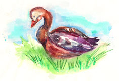 Goose hand painted watercolor illustration Stock Photos