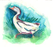 Goose hand painted watercolor illustration Stock Image