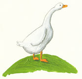 Goose on the hill Royalty Free Stock Images