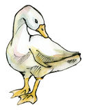 Goose isolated on white Stock Photo