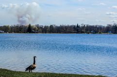 Goose Looking Over Pell Lake, Wisconsin with Smoke Cloud. A Canadian Goose looking over Pell Lake, Wisconsin with a smoke cloud from something burning behind the stock photo