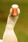 Goose neck Stock Photo