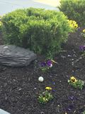 Goose Nest In A Flowerbed royalty free stock photography