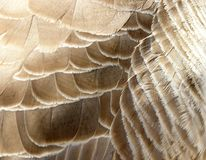 Goose plumage Royalty Free Stock Photography
