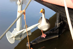 A goose on a rudder. Of barge next to an Anchor Royalty Free Stock Photography