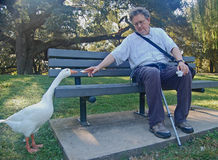 Goose says, if I stretch far enough, I can reach it. royalty free stock photos