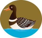 Goose swimming Stock Photo