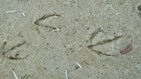 Goose tracks Stock Photography