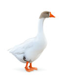 Goose vector illustration Royalty Free Stock Photography