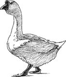 Goose walking Royalty Free Stock Photography