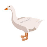 Goose. On white background. Vector illustration Stock Images