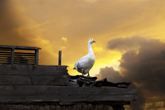 Goose on yellow sky Royalty Free Stock Images