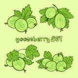 051goosebbery1 Stock Photography