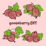 Goosebbery Stock Images