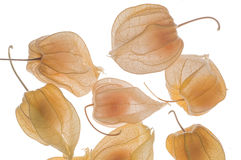 Gooseberries. Illuminated on a light table Royalty Free Stock Images