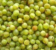 Gooseberries. fotografia de stock royalty free