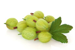 Gooseberries royalty free stock images