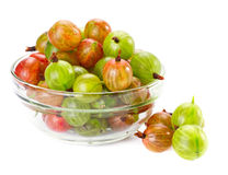 Gooseberries Stock Image