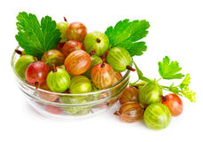 Gooseberries. Isolated on white background Stock Photography