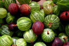Gooseberries Royalty Free Stock Image