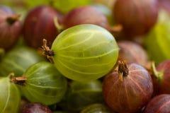 gooseberries Imagem de Stock