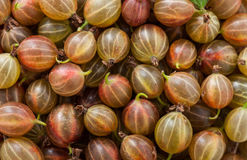 Gooseberries backgrounds Stock Image