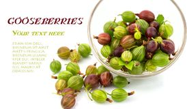 Gooseberries in a bowl. Macro view of gooseberries in a bowl, text royalty free stock image