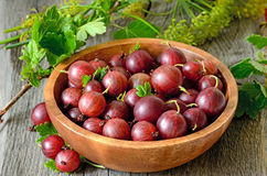 Gooseberries in bowl Royalty Free Stock Photography