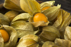 Gooseberries in Close Royalty Free Stock Photo