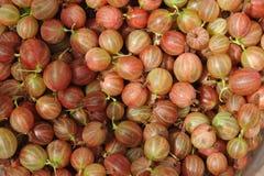 Gooseberries Stock Images