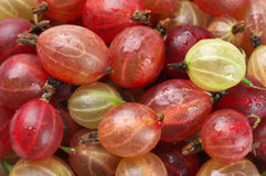 Gooseberries close-up background Stock Photography