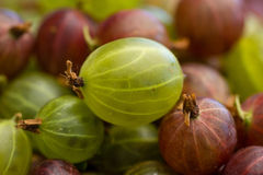 Gooseberries. Close-up of some fresh gooseberries stock image