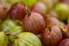 Gooseberries. Close-up of some fresh gooseberries royalty free stock photos