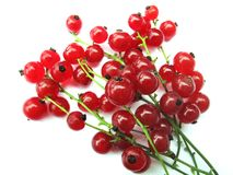 Gooseberries (currants) Royalty Free Stock Photography