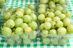 Gooseberries at Farmers Market Royalty Free Stock Images