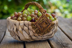 Gooseberries Royalty Free Stock Photo