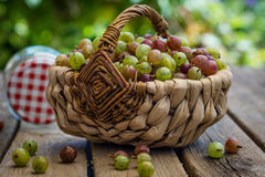 Gooseberries Stock Photography