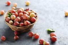 Gooseberries fruit Royalty Free Stock Photos