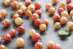 Gooseberries fruit Royalty Free Stock Images