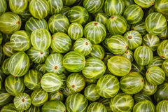 Gooseberries green background Stock Photography