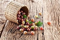 Gooseberries have dropped from the basket Royalty Free Stock Image