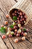Gooseberries have dropped from the basket Stock Image