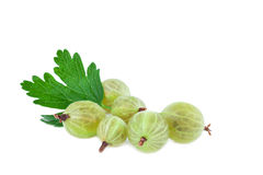 Gooseberries isolated Royalty Free Stock Photos
