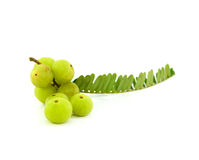 Gooseberries isolated on white background. Stock Images