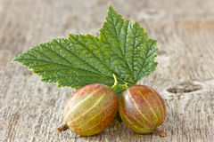 Gooseberries with leaf Royalty Free Stock Photos