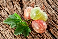 Gooseberries with leaves Royalty Free Stock Photography