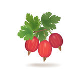 Gooseberries with leaves isolated on white. Berry icon. Royalty Free Stock Images