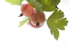 Gooseberries maduros imagem de stock royalty free