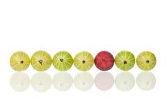 Gooseberries maduros fotos de stock