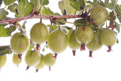 Gooseberries over white Royalty Free Stock Images